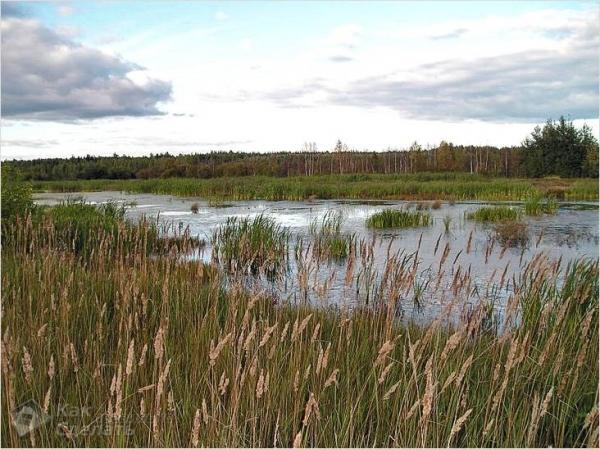 Фундамент на болоте своими руками - как сделать